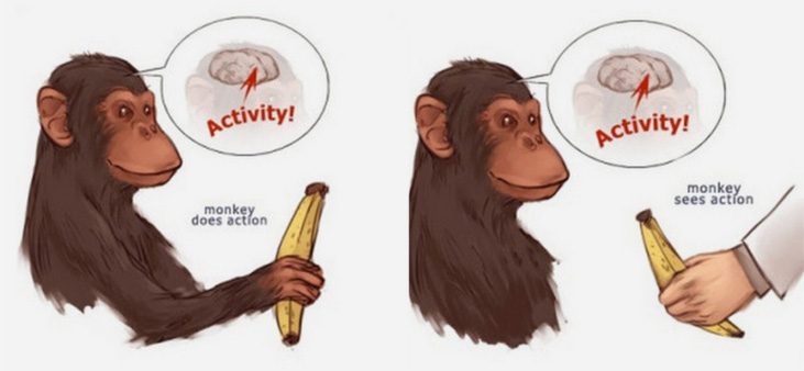 banana creates activation on monkey's brain