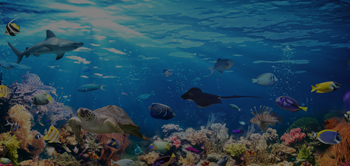 wild underwater life