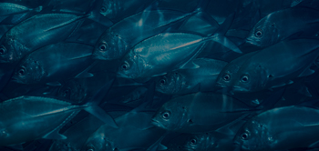 wild fish school