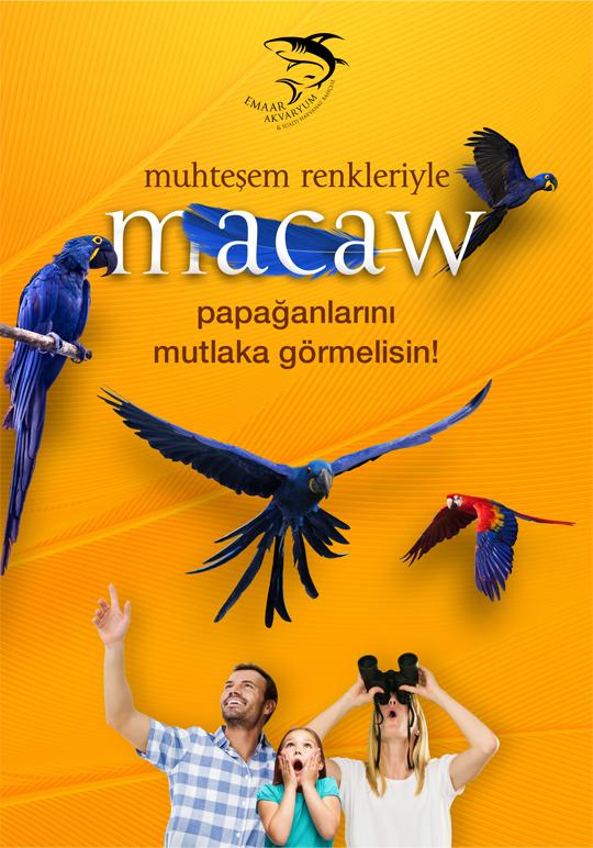 emaar aquarium macaw parrot keyvisual design