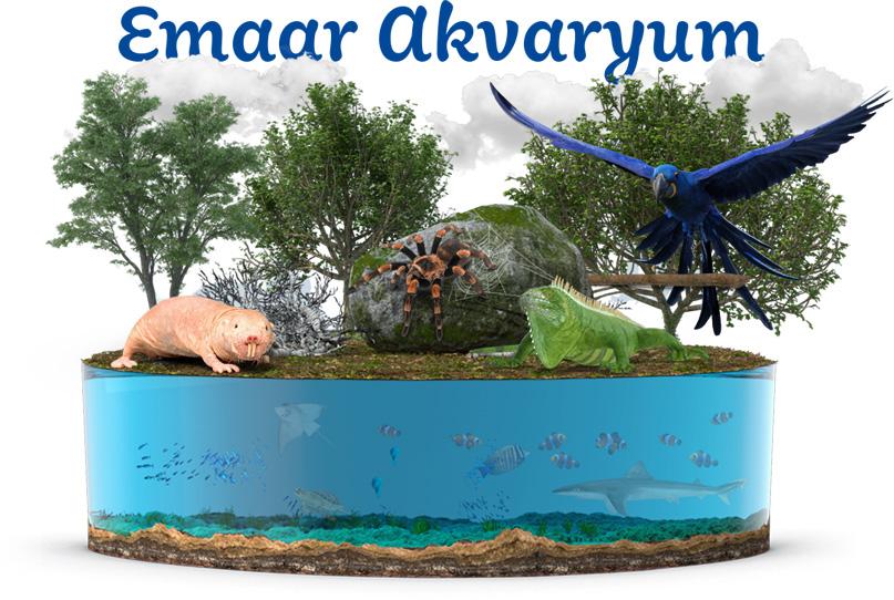 emaar aquarium wildlife concept