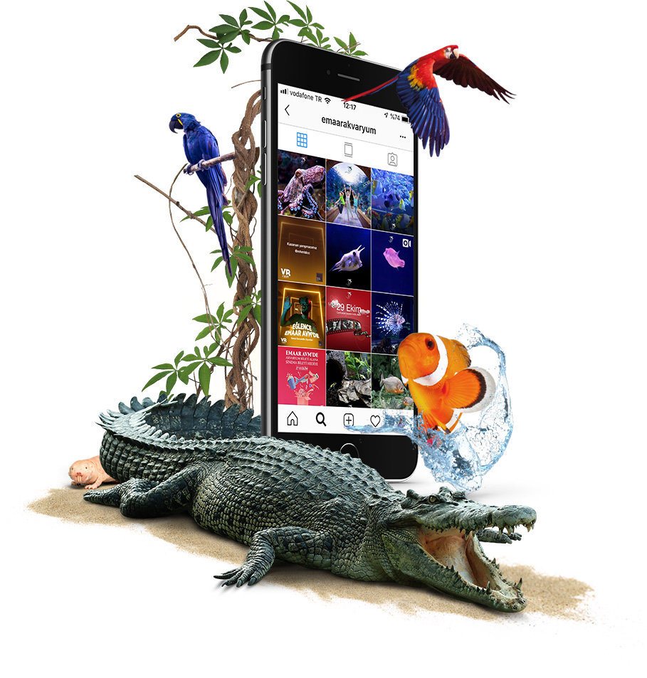 emaar aquarium social media visual design with a big crocodile and macaws